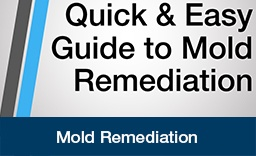 Mold Remediation Guide