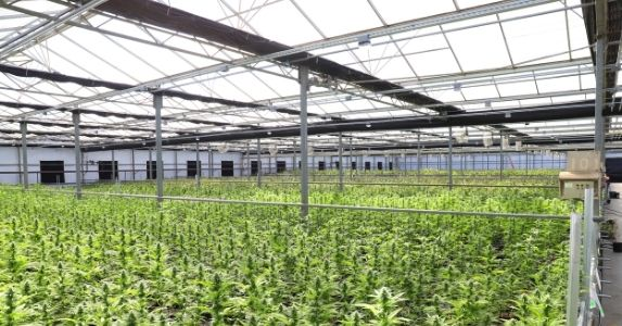 How Employers Can Advance Health and Worker Safety in the Cannabis Industry
