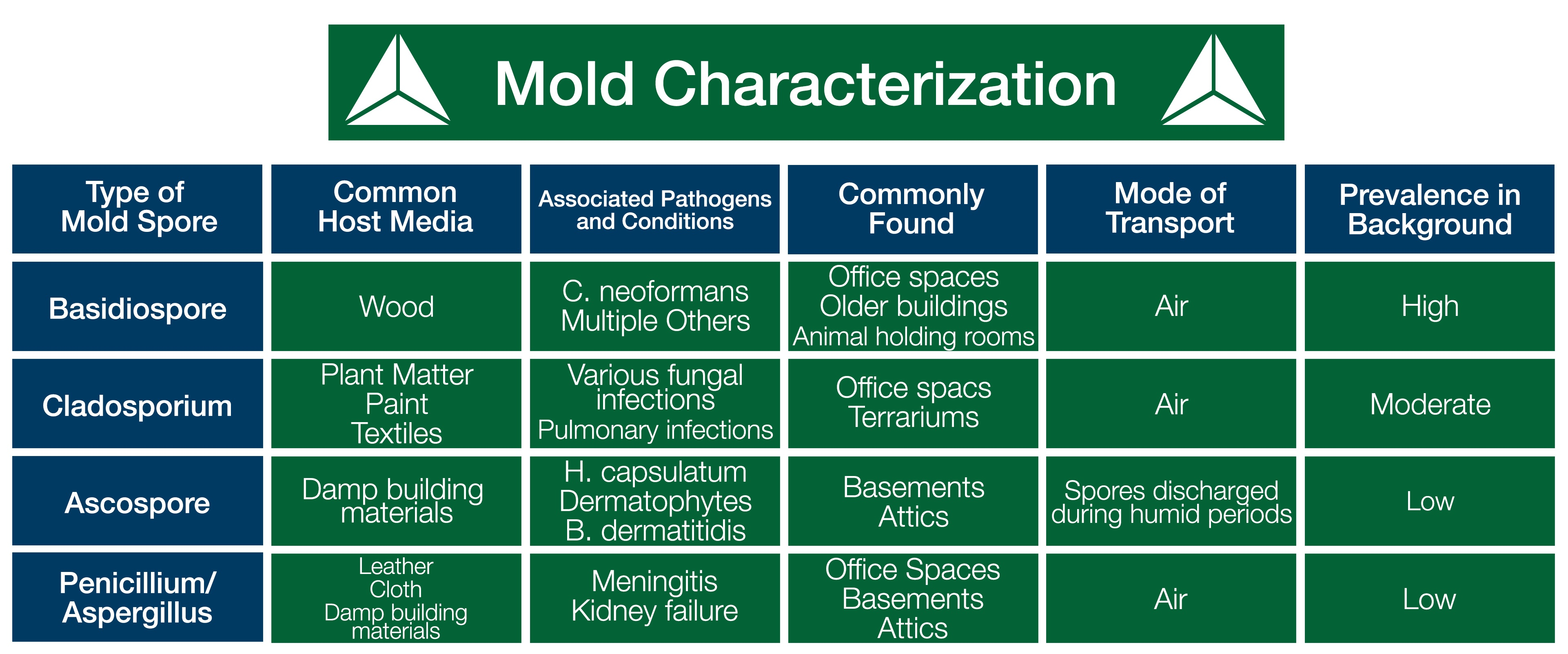 You Might Have Mold: 4 Most Common Lab Molds and Where They Live